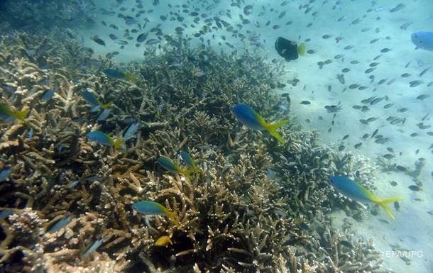 Морской фауне грозит массовое вымирание − ученые