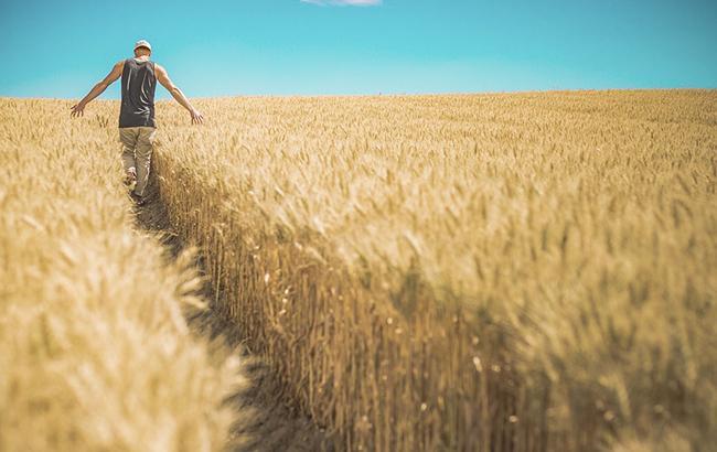 Урожай-2018: украинские аграрии намолотили 28,6 млн тонн зерна