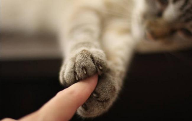 Я бы уже давно могла умереть: женщина рассказала, как кошка спасла ее от рака (фото)